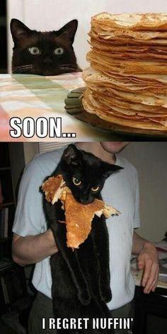 cat-food-meme-pancakes-i-regret-nothing