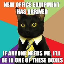 business-cat-in-boxes