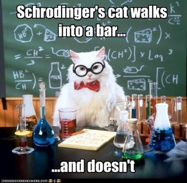 science cat-schrodinger
