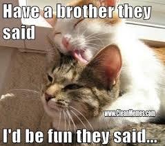 cat-siblings-brothers