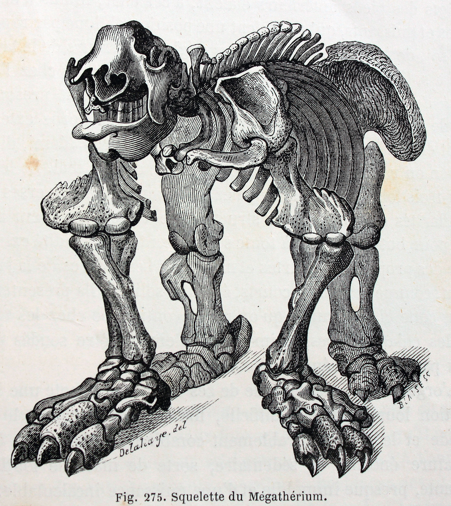 This is actually some type of  elephant-sized ground sloth , as I learned when I googled it.