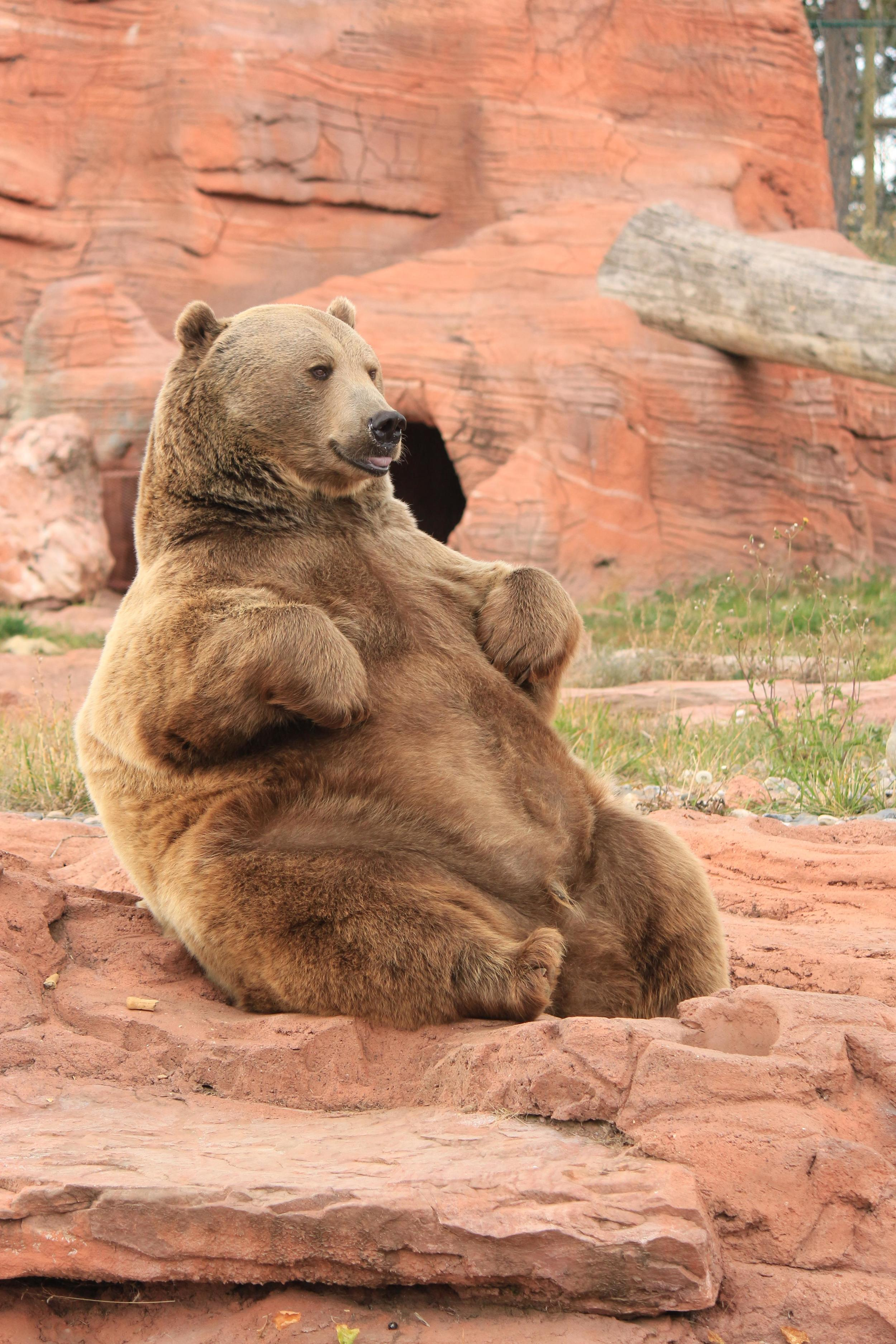 This bear looks insanely happy. Like he just ate an entire mountain of mac and cheese. Jealous.