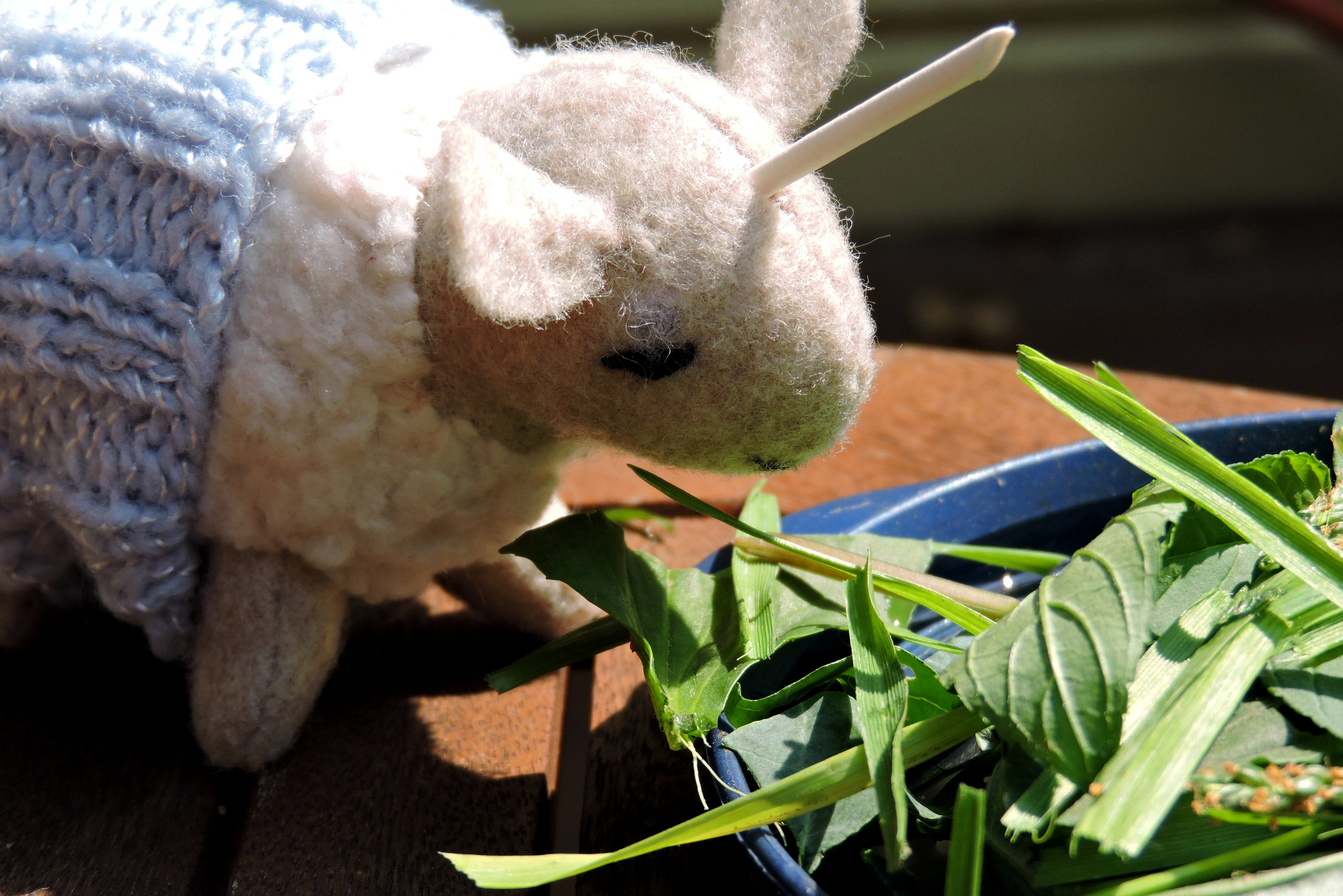 Rutherford the Unicorn Sheep eats a salad.