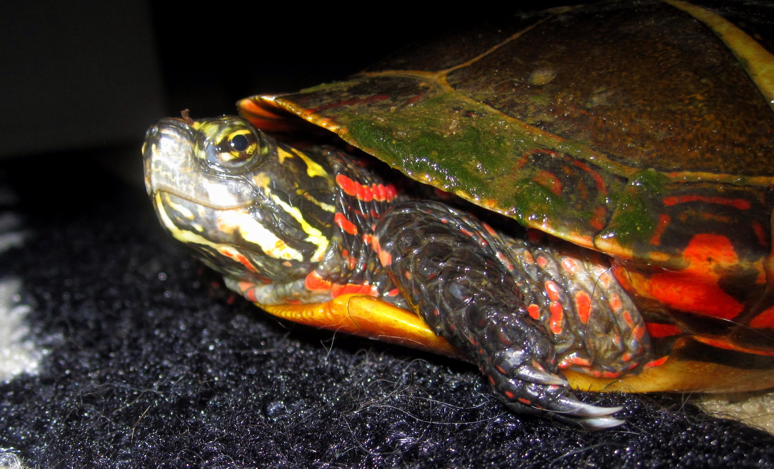 Doesn't Gaheris the Turtle look just a bit... evil?
