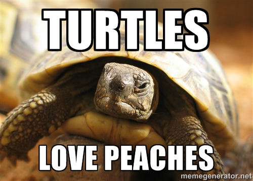 This isn't Lionel, but he basically looked like this. Except this turtle doesn't have the little quirky little smile, the mischievous glint in his eye, or the little wrinkle on the left side of his mouth. Actually, this turtle looks nothing like Lionel--I take it back.