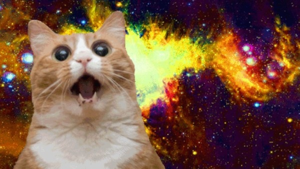 universe cat