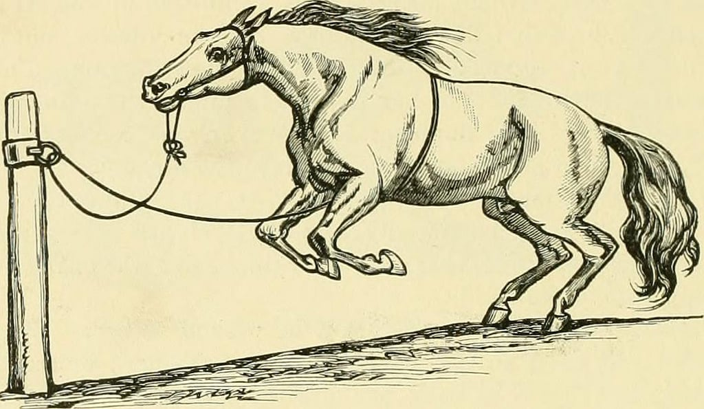This horse isn't technically estrapading, as it has no rider. Instead, you can see clearly that the horse estrapaded successfully, as, well, it has no rider.