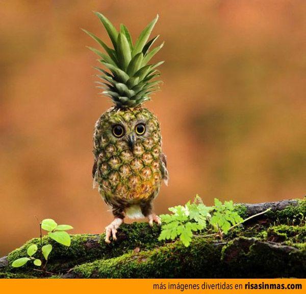 pineapple-owl