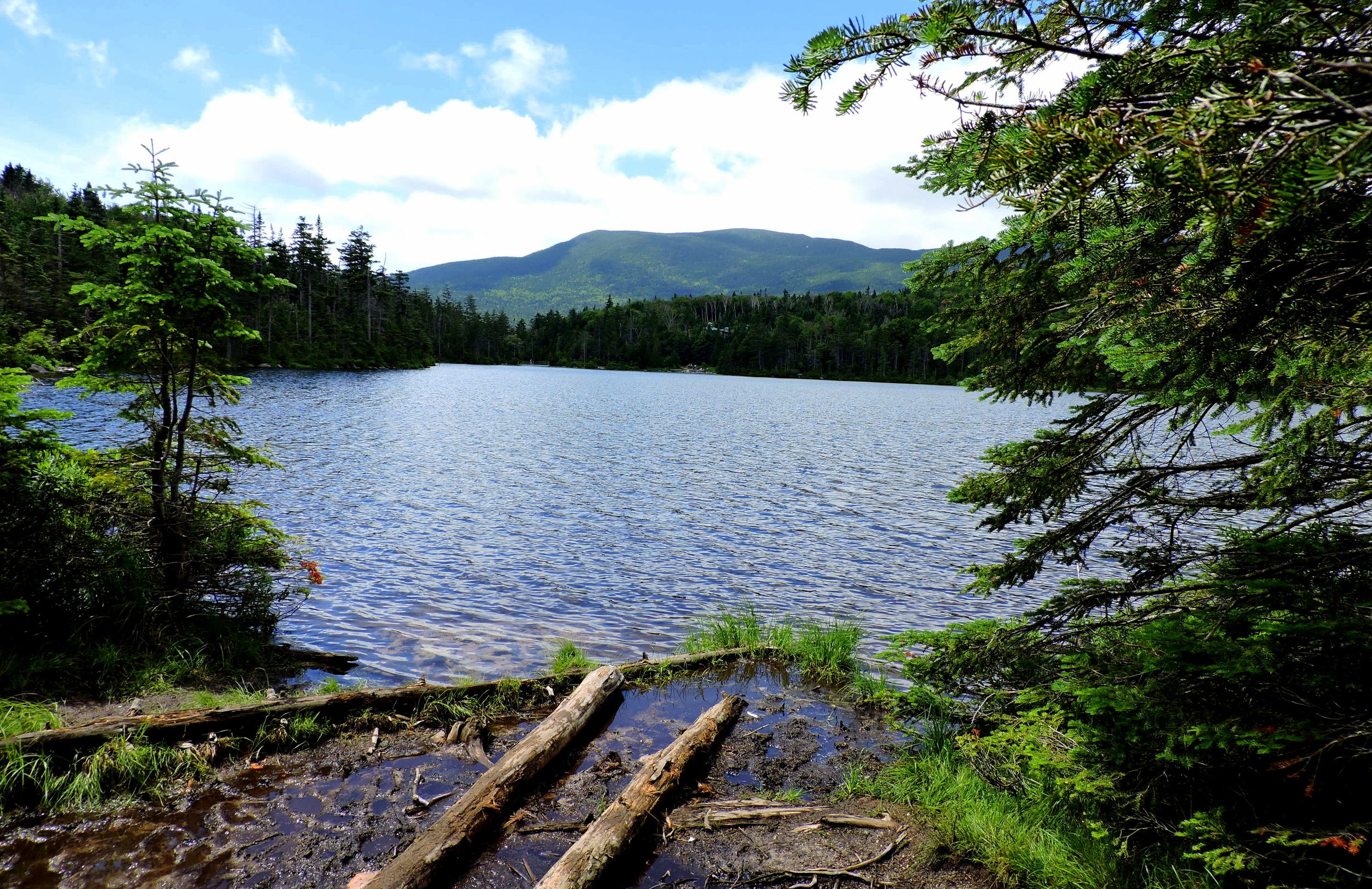 The lake contains brook trout and ducks!