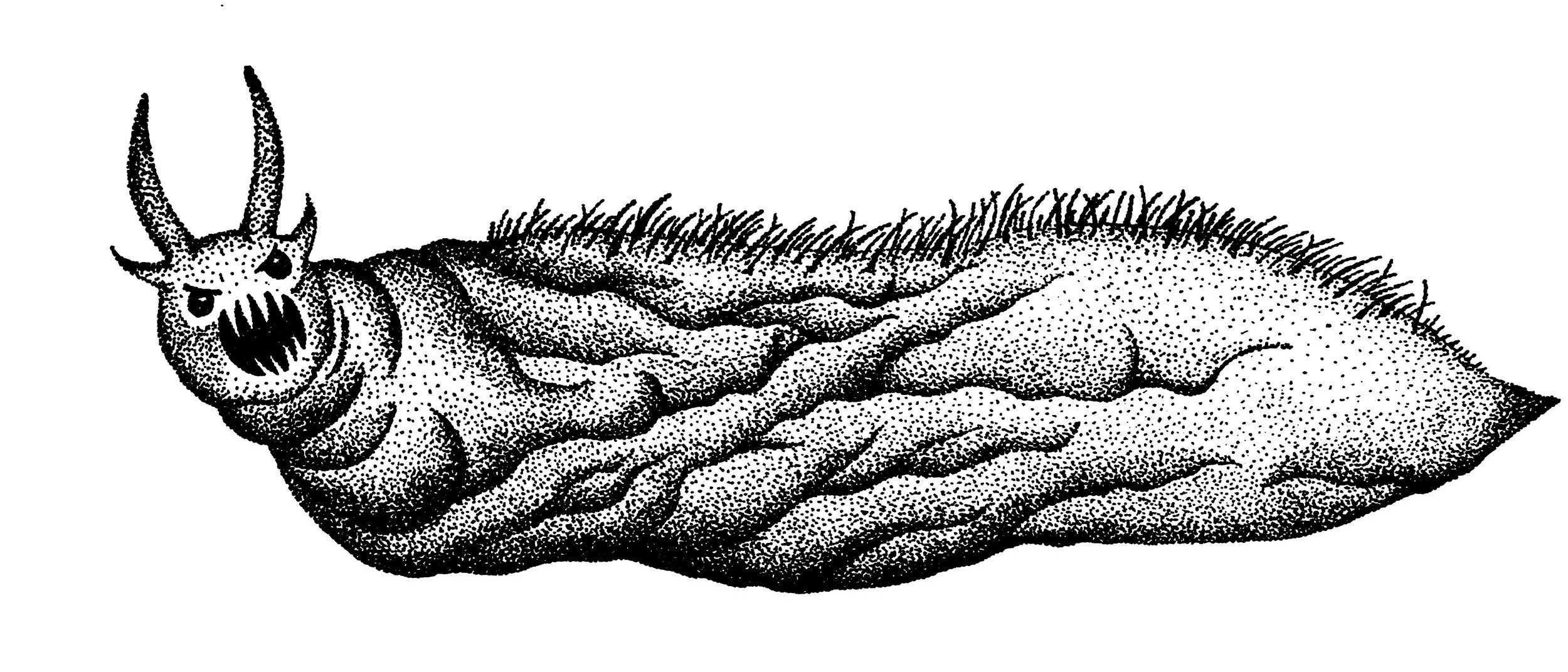 This is the stippled drawing of the same monster, slug-like, with quills on the back and big teeth.