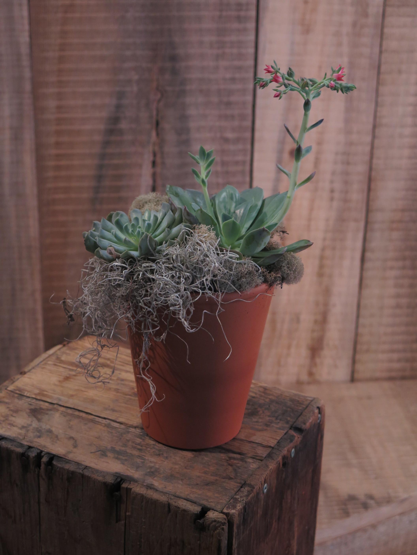Succulent - Dish Garden Small