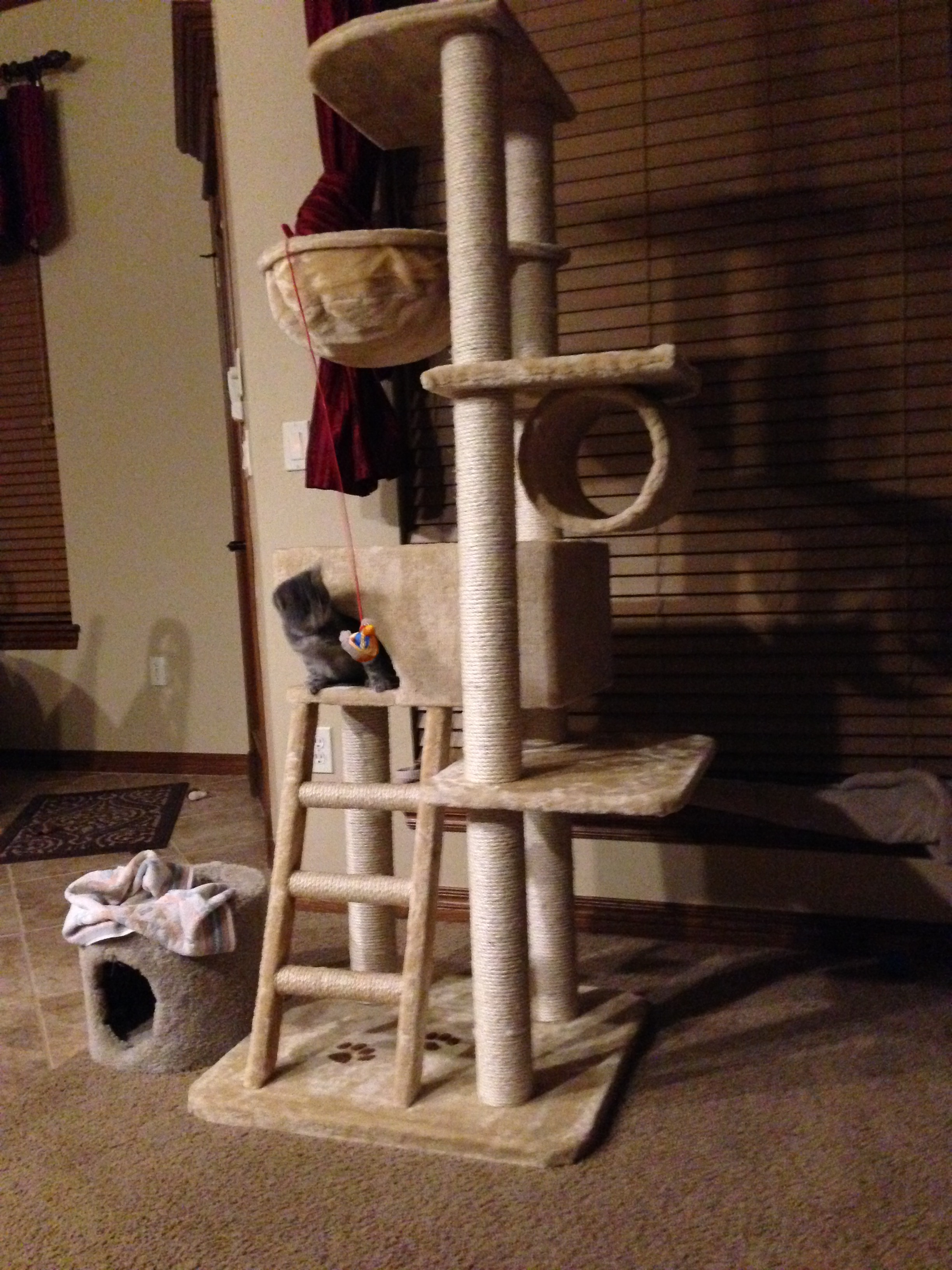 (Tabby's Cat Tree -- Photo Copyright 2014 by Jaz Primo)