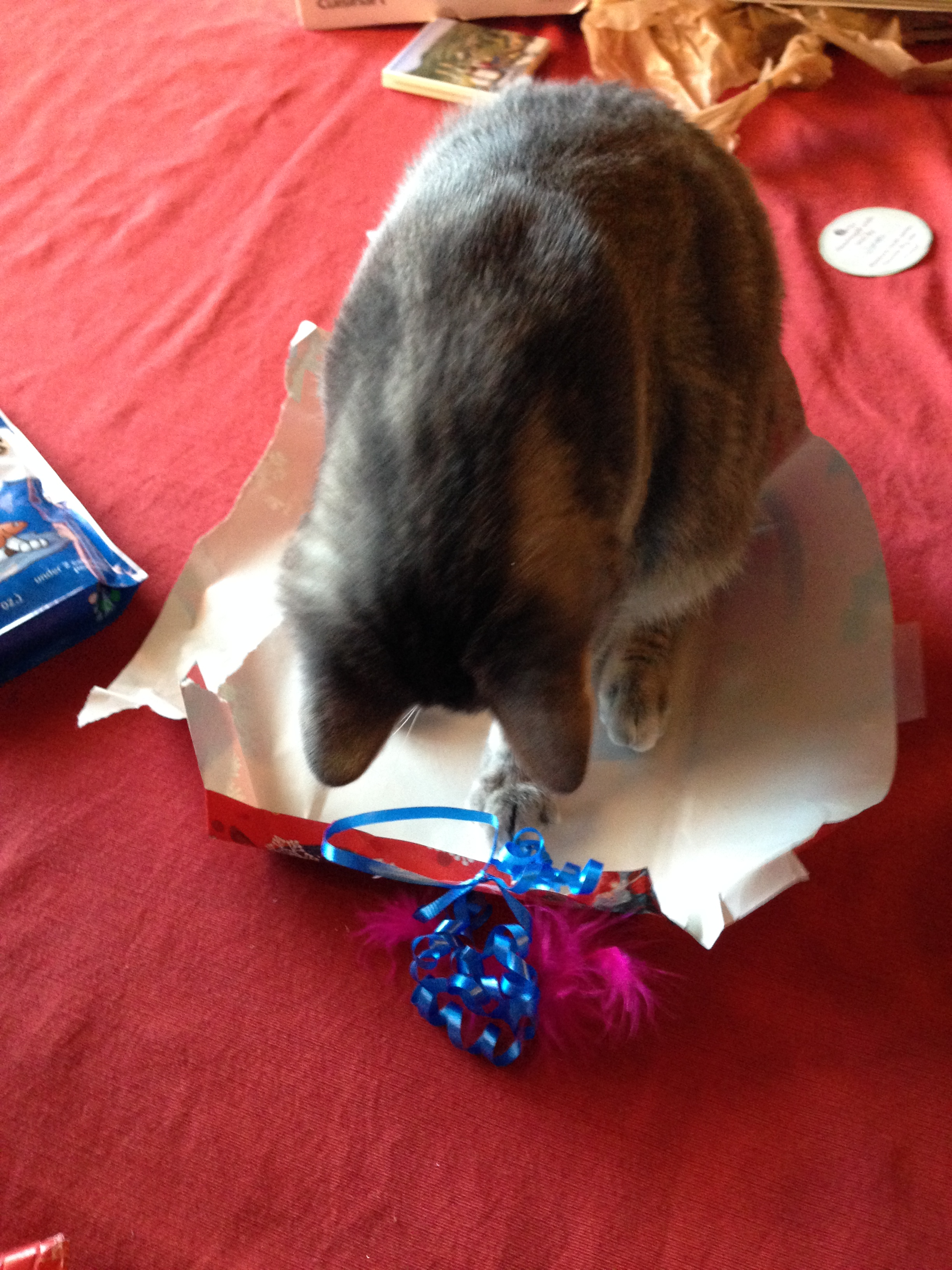 Tabby Unwraps Gifts -- (PHOTO COPYRIGHT 2014 BY JAZ PRIMO)