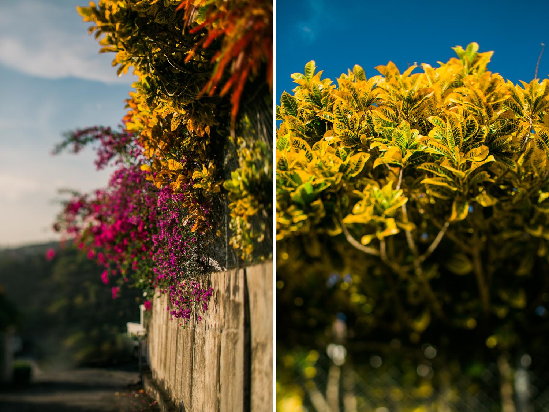 Martinique_West_Indies-0013.jpg