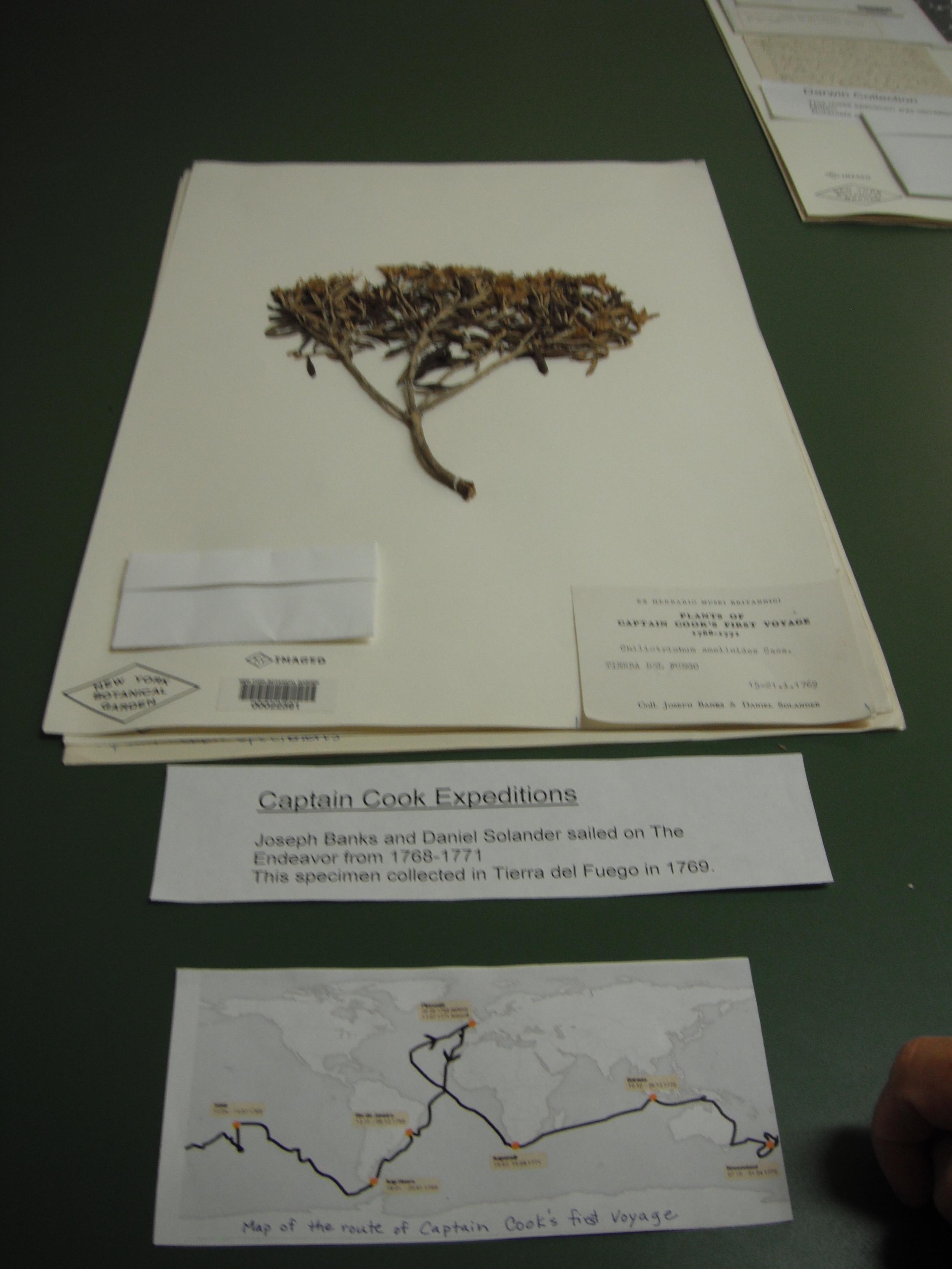 Specimen from Captain Cook's voyage
