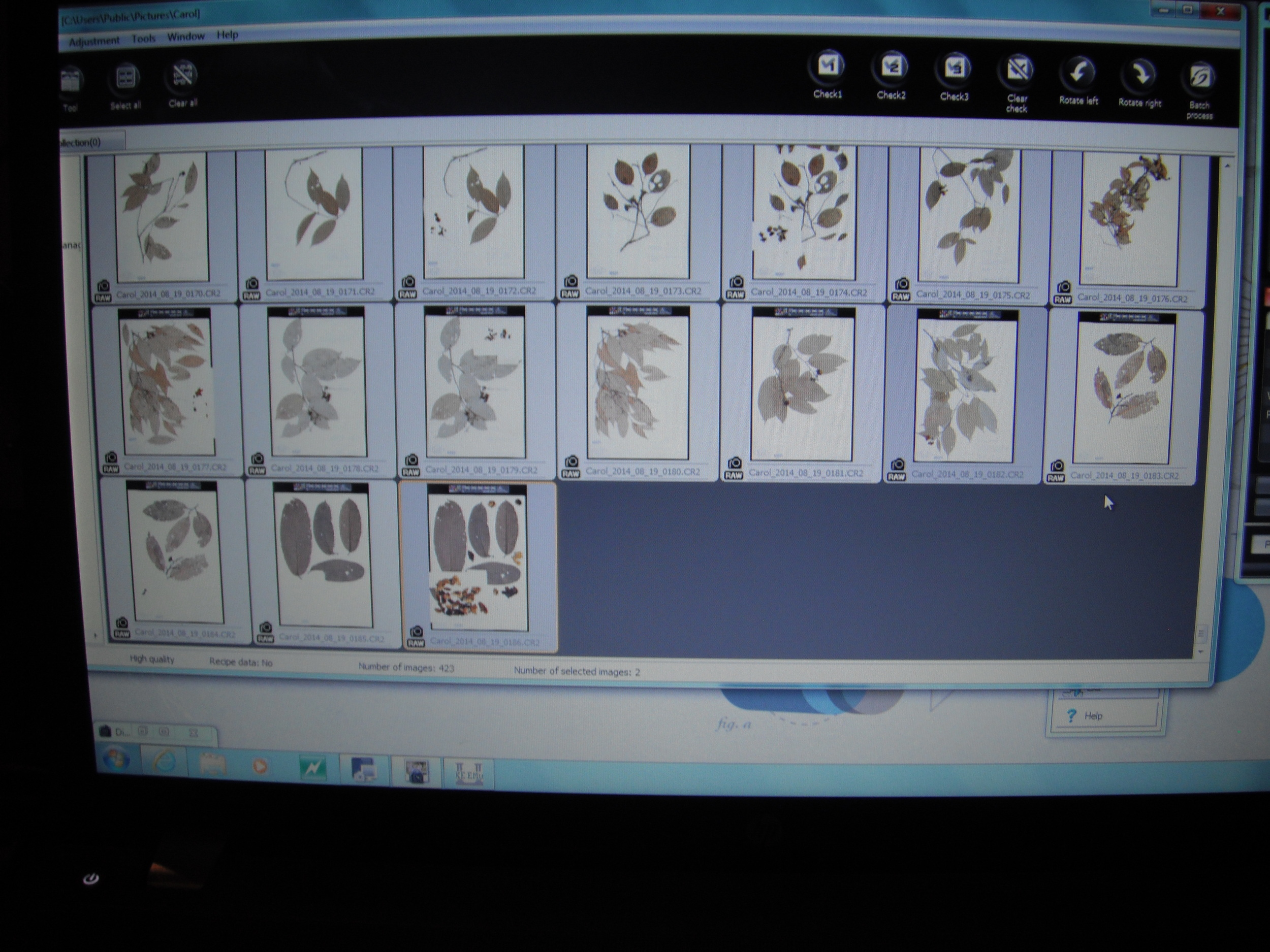 Photos of specimens to be added to database
