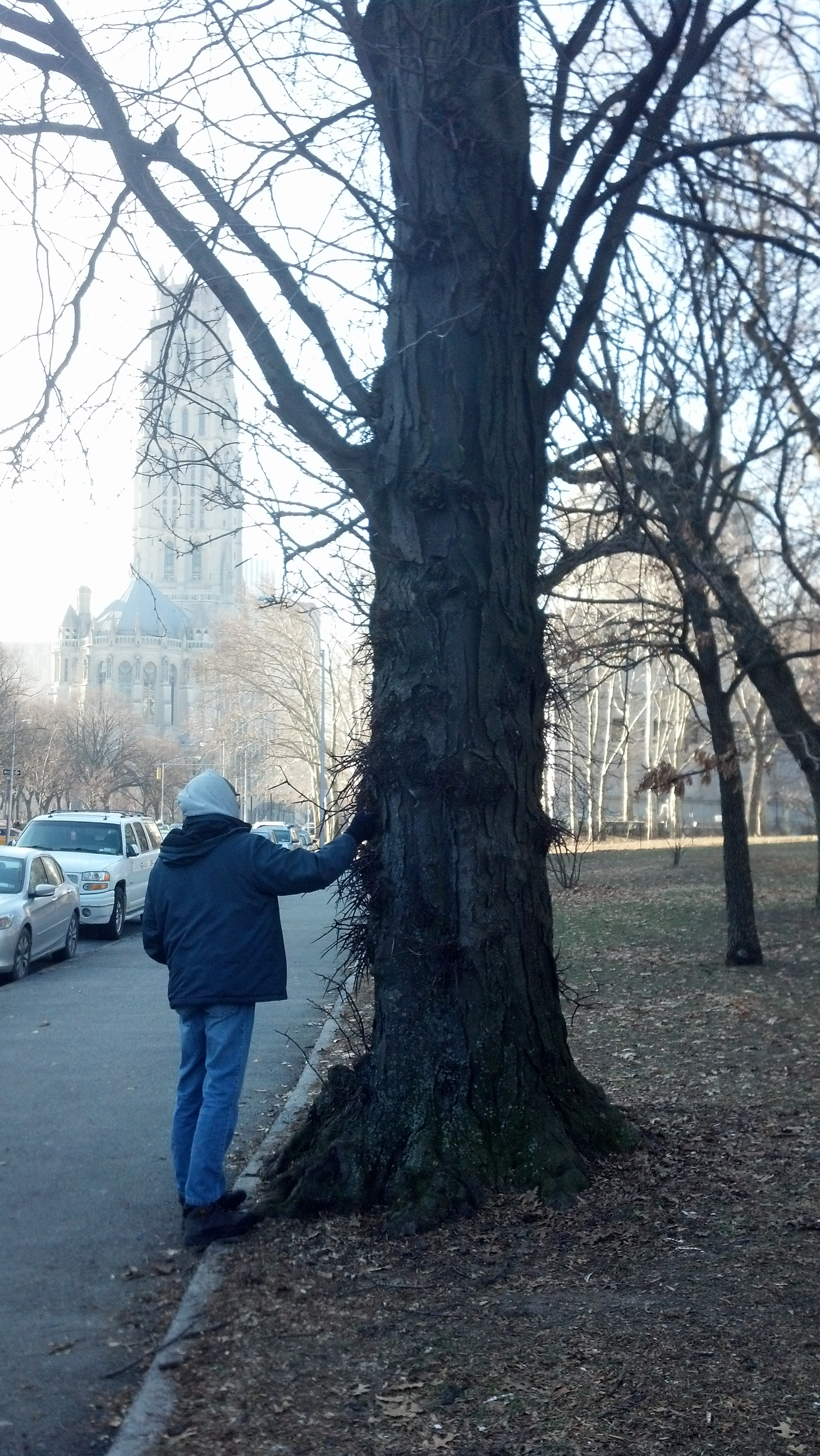 Cousin Matt and the honey locust (Riverside Church in the background)
