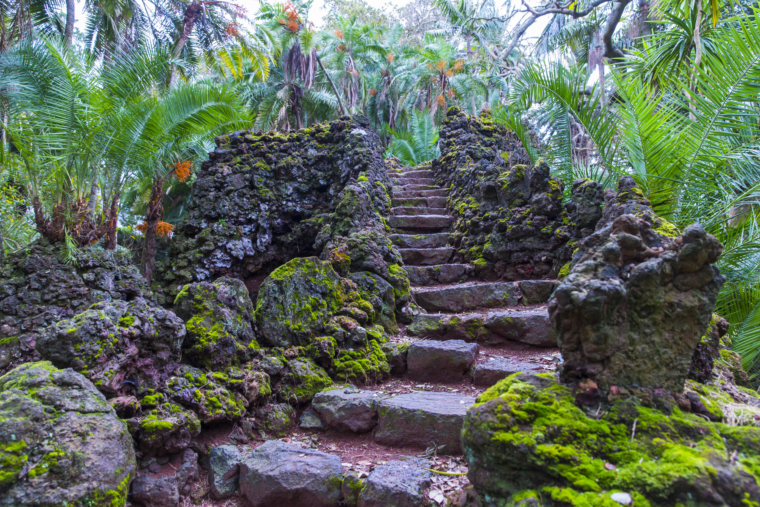 Jardim António Borges, built 1858–1861, this urban botanical garden with trails & grottoes showcases rare & exotic plants