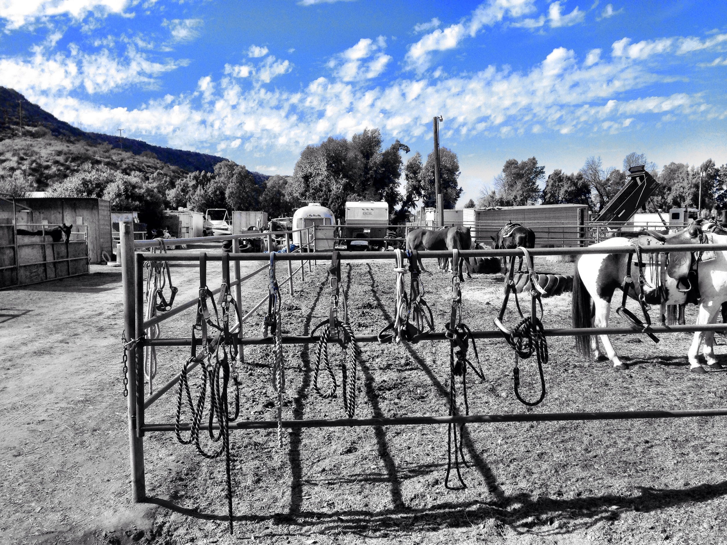 Memories of lessons learned, cowgirl style.
