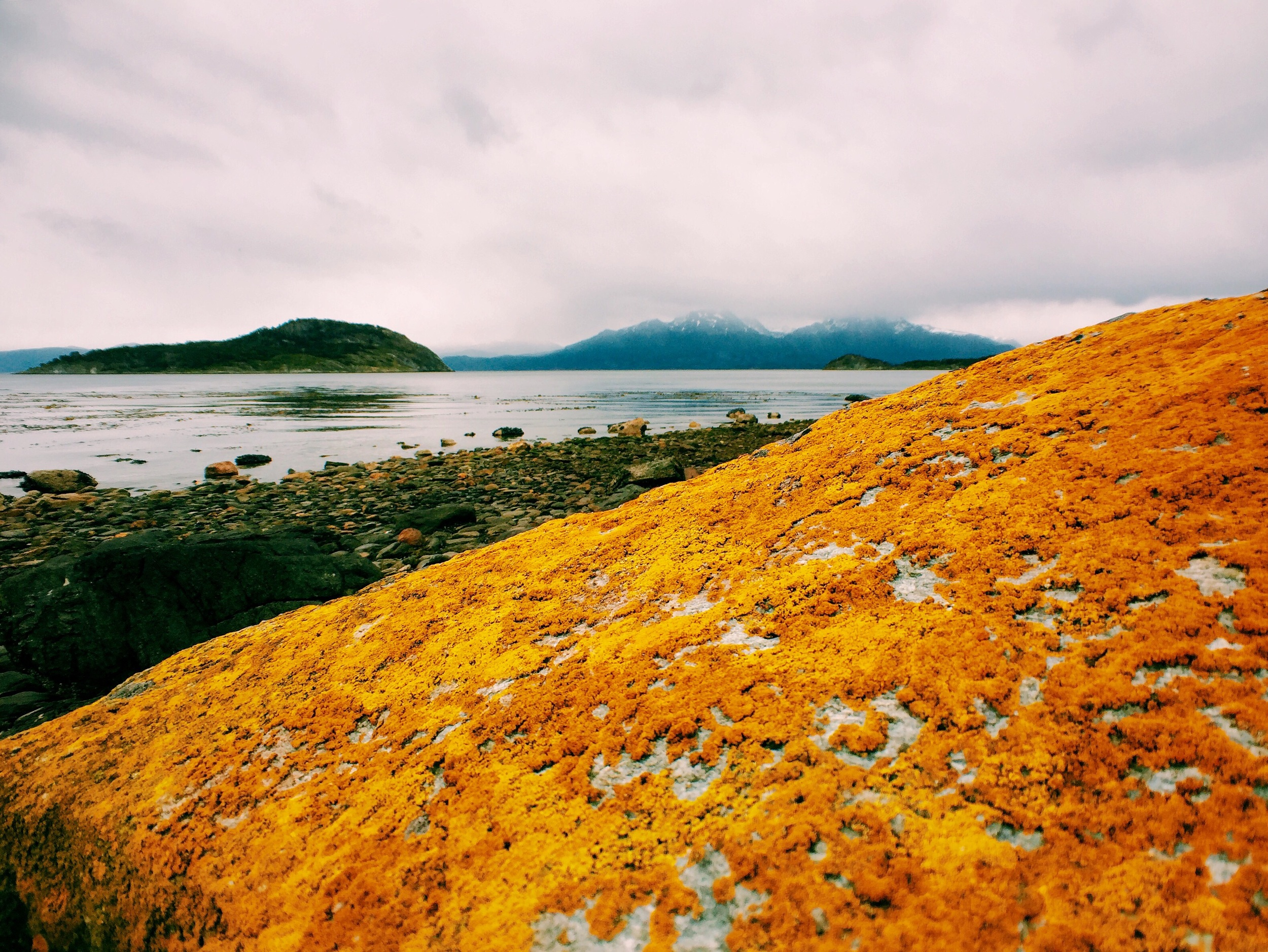 More incredible colors. The lichen at Tierra del Fuego sparkles against the gray skies.