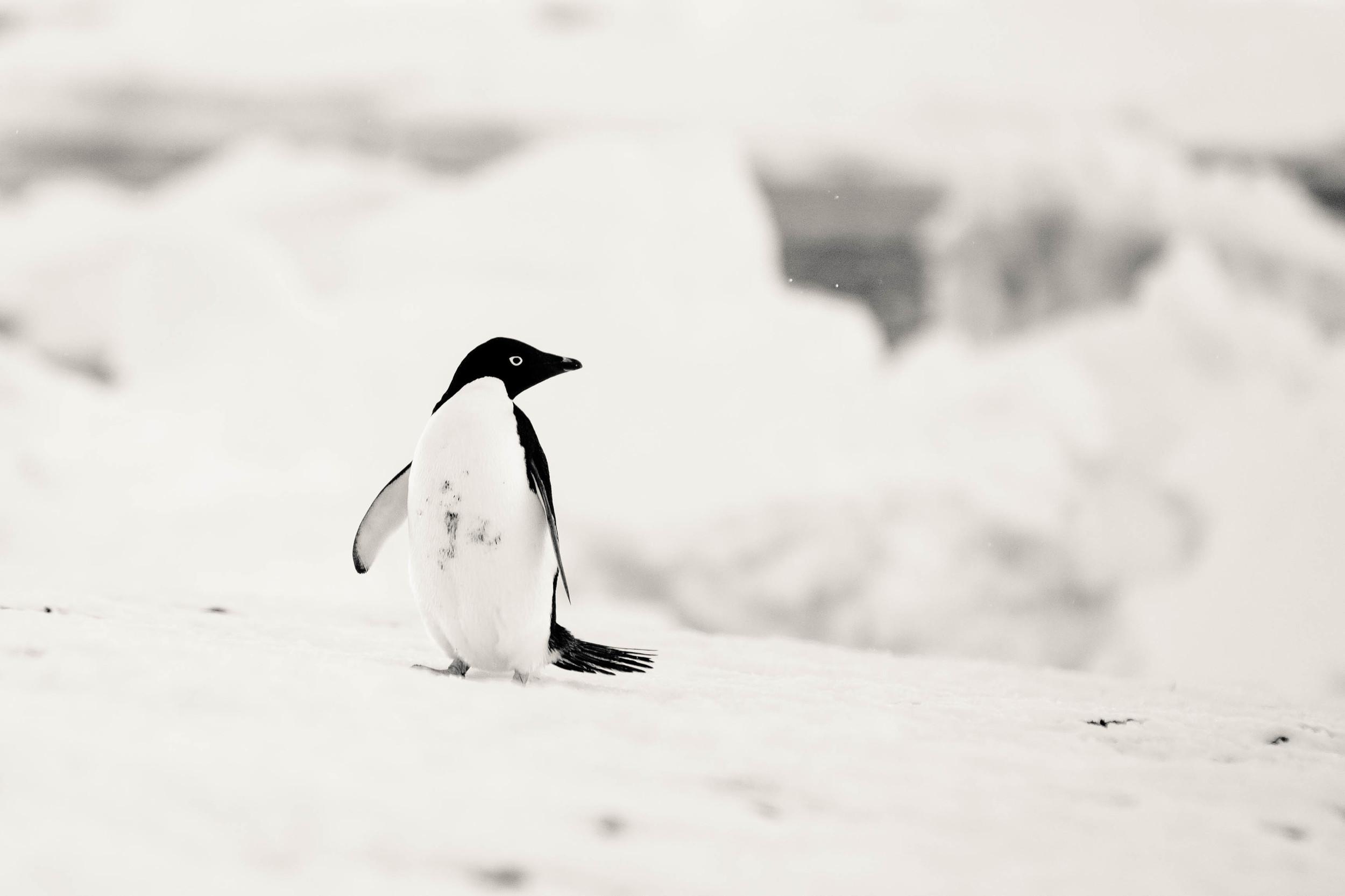 allisonqmccarthy-antarctica-story-1.jpg