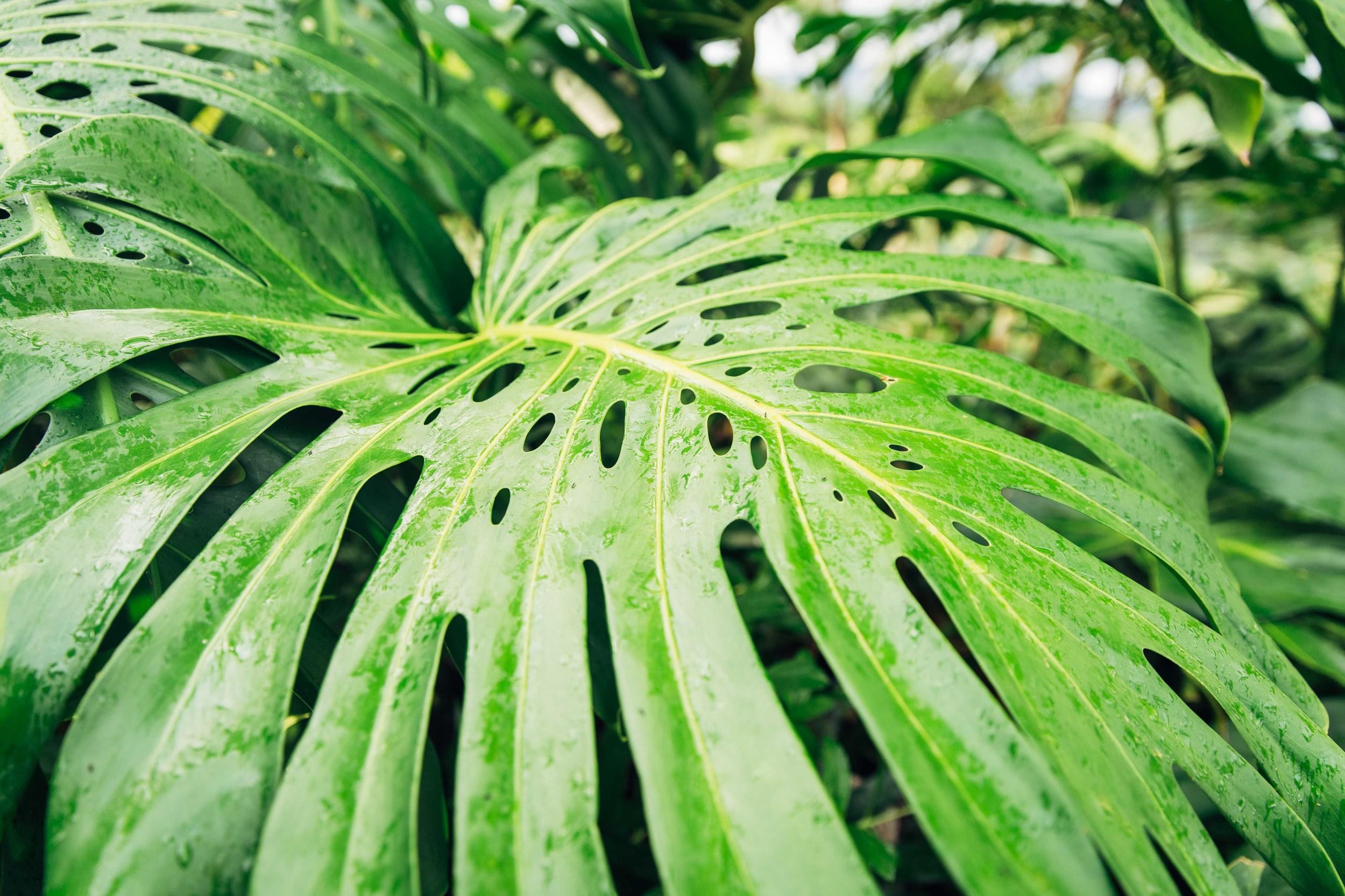 kauai-1550.jpg