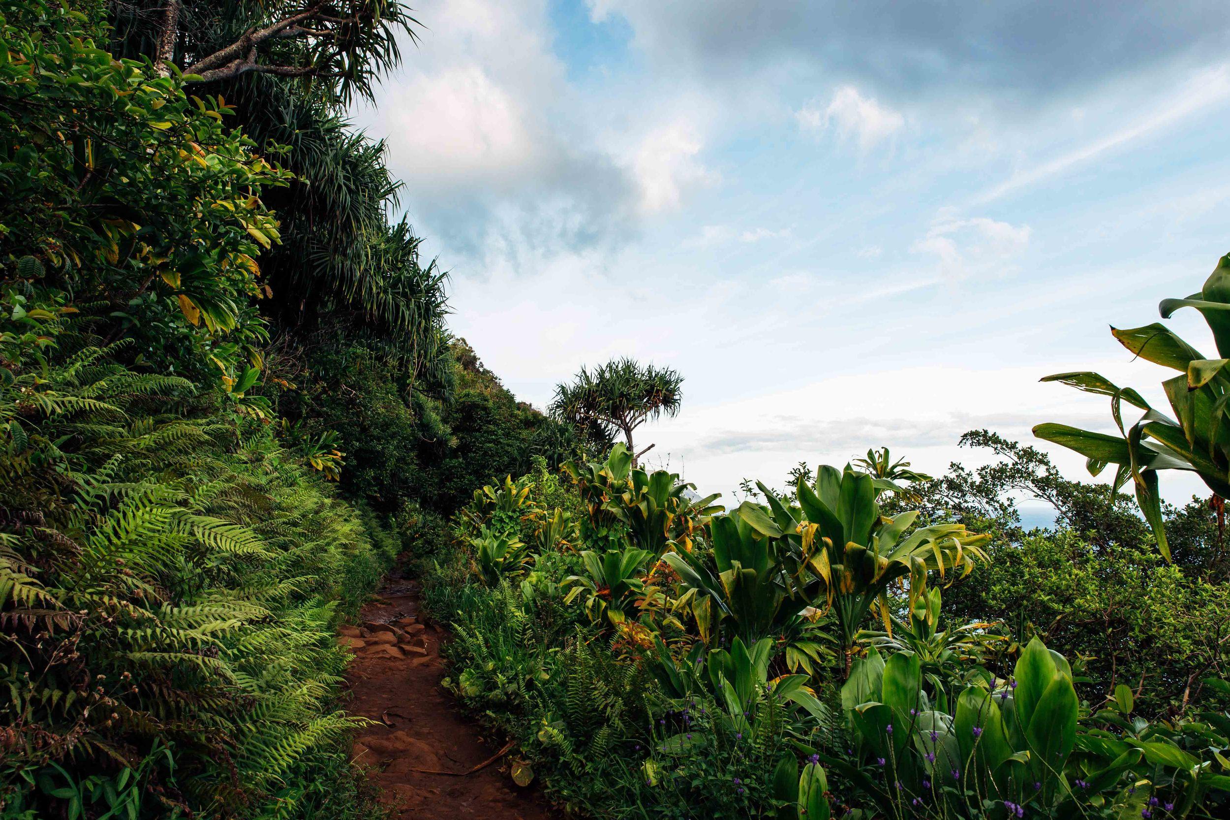 kauai-2247.jpg