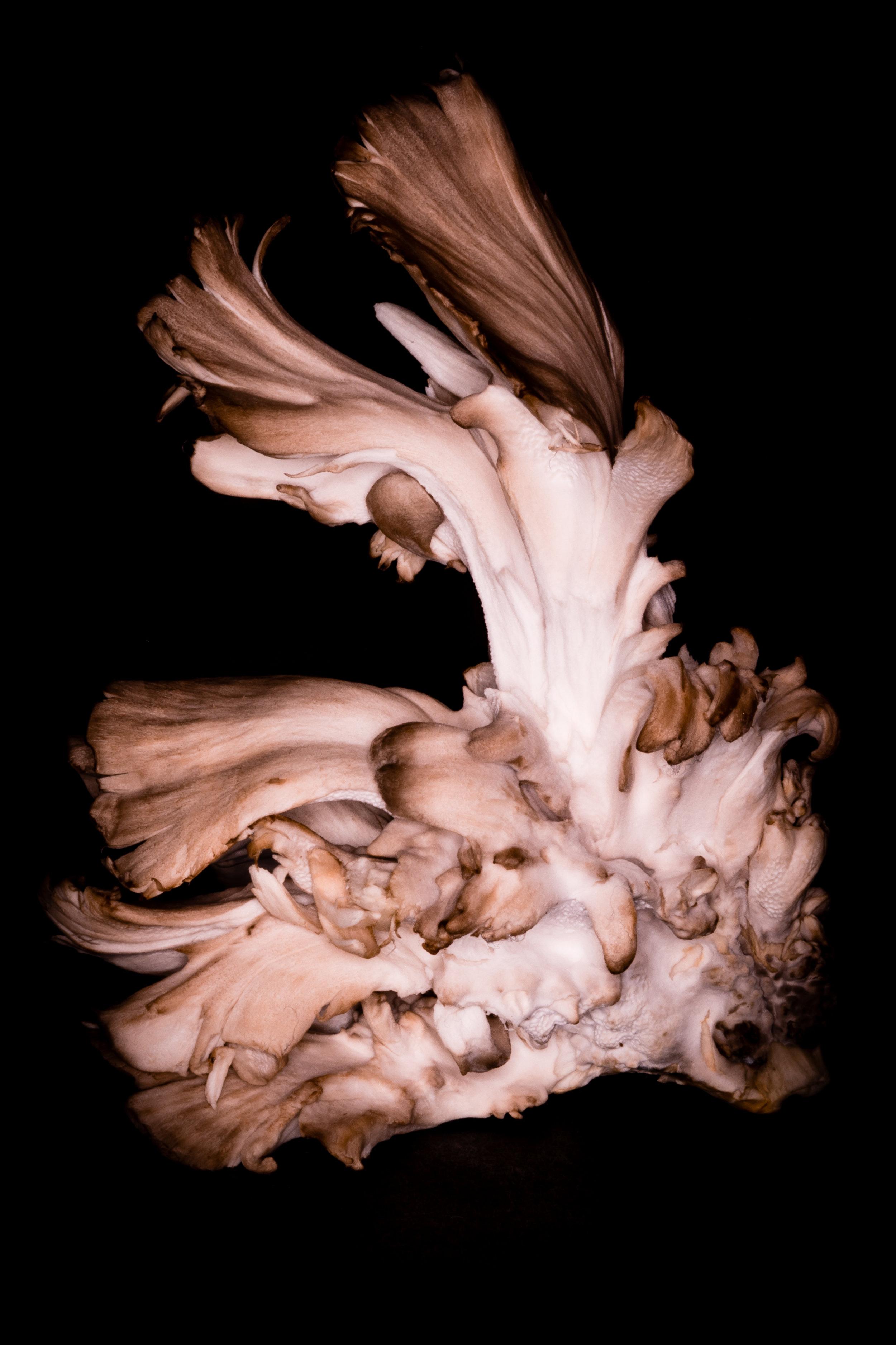 Maitake Mushroom Fashion Shoot San Fransisco, California