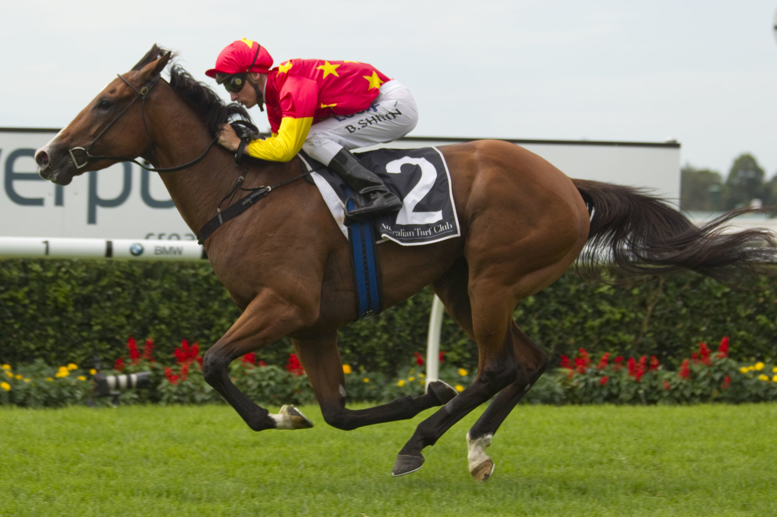 First Seal was a class above her rivals on Saturday. Picture: Martin King Sportpix