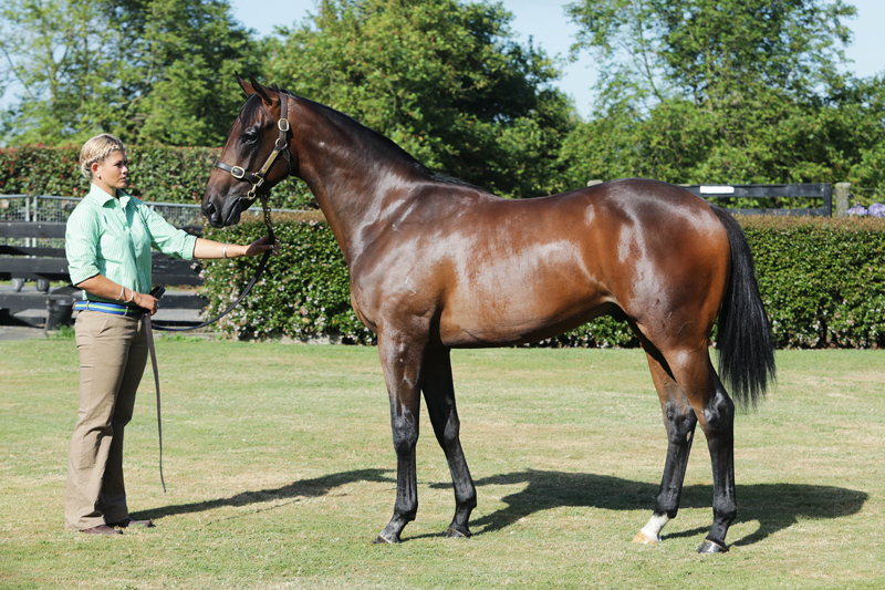 Rock And Swing (pictured as a yearling)