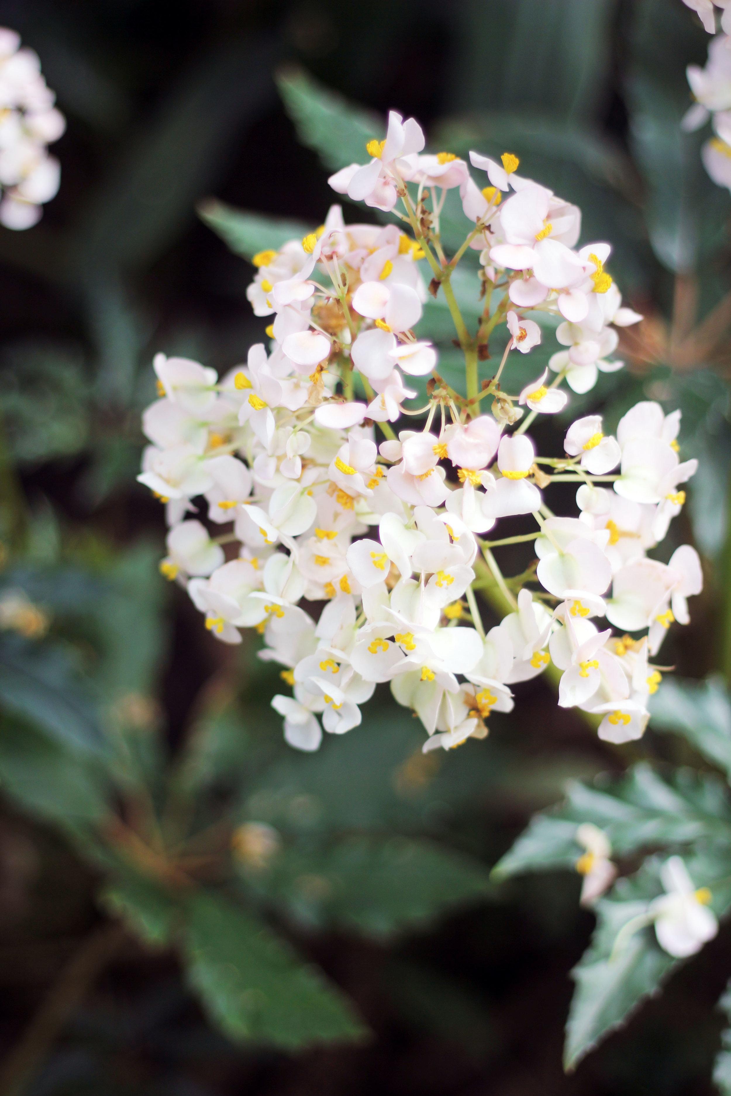 allan gardens flowers