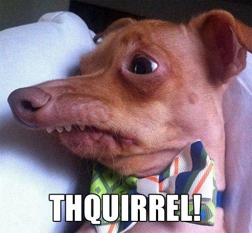 thquirrel.jpg