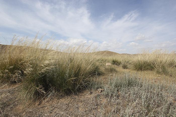 saiwusu landscape grass small.jpg