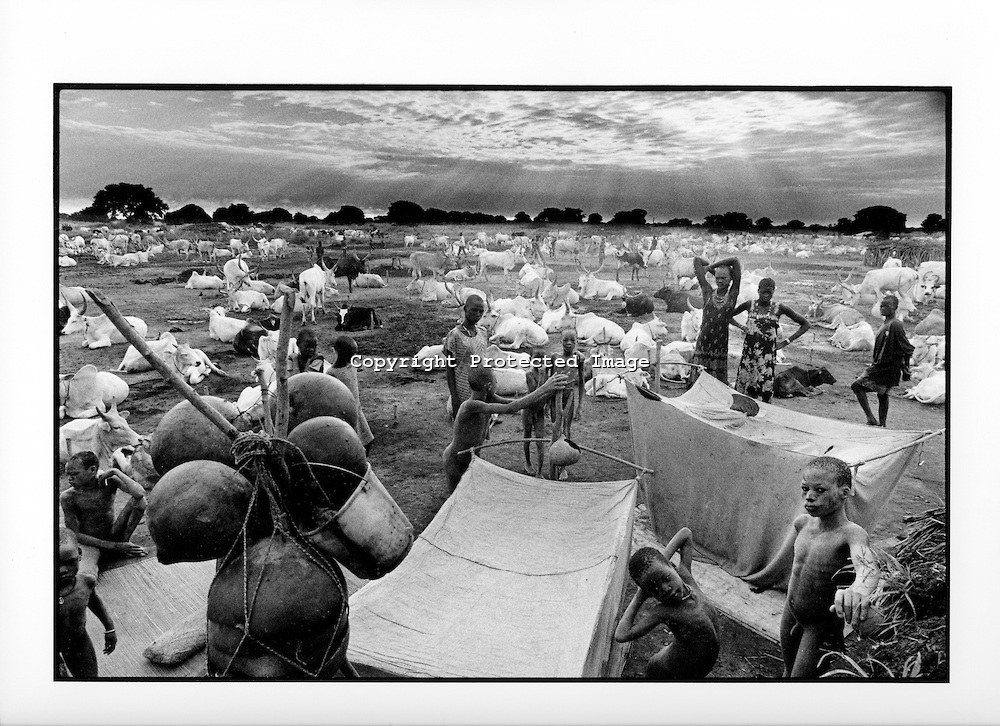 Cattle farmers in South Sudan risk having to migrate out of the area or die: a temperature increase as small as 2-3 degrees celsius will make the area too hot for humans to live in.  Respectfully gathered from  Eraker's Photoshelter website