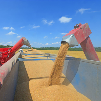 Grain2.jpg