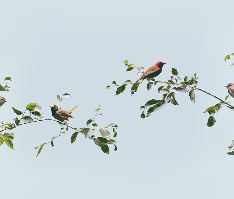 thebirds_1000