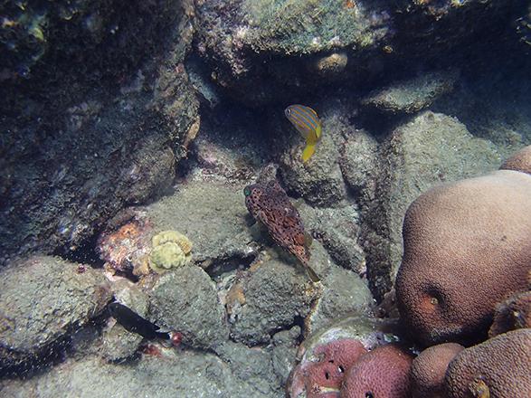 underwater04.jpg