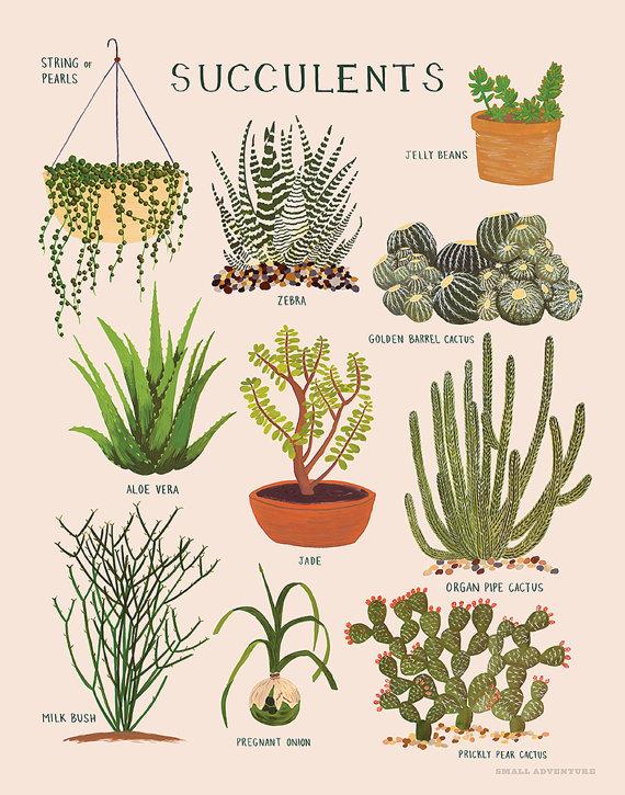 Succulents Print - Small Adventure