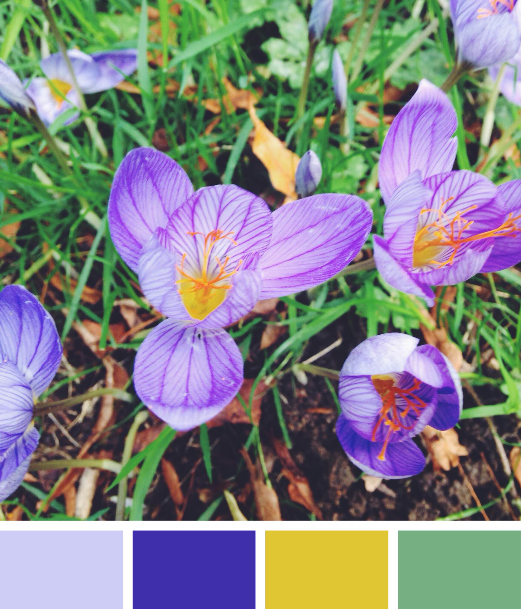 colours3.jpg