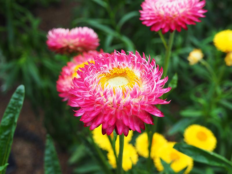 Liz Mosley Kew Gardens
