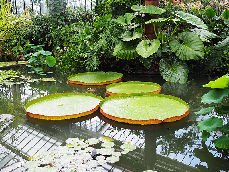 Liz Mosley Key Gardens