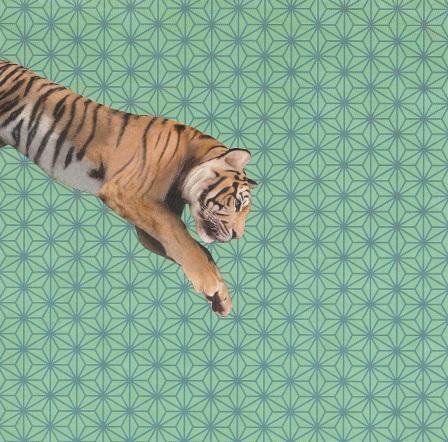 tiger jpeg.jpg