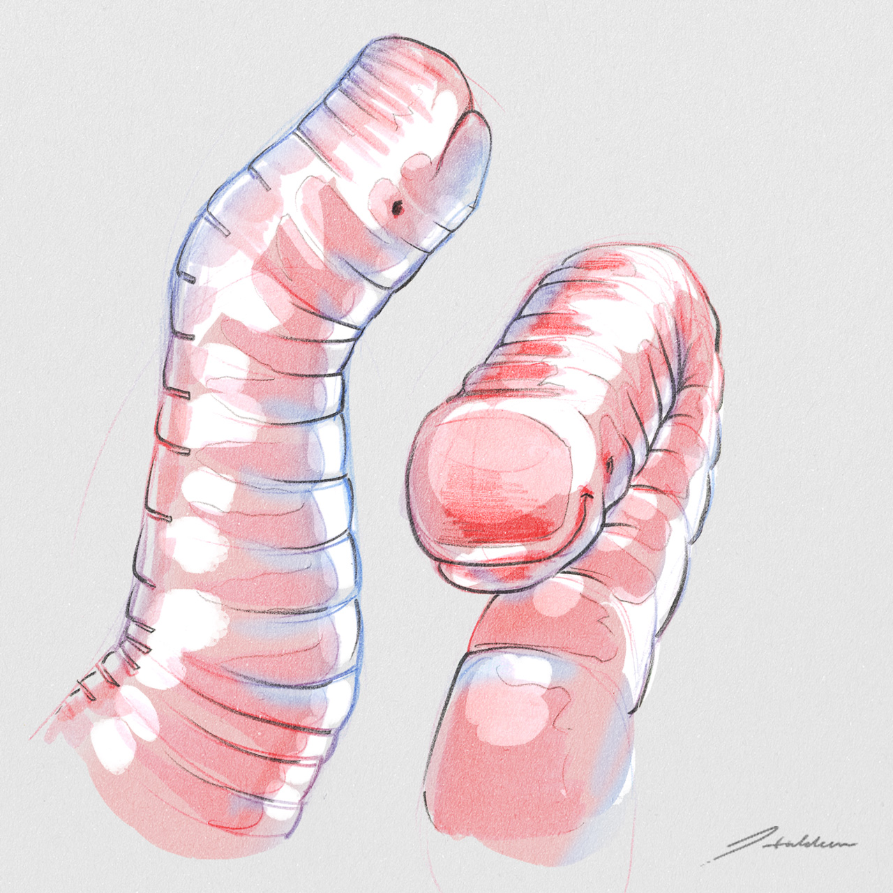 worm01.jpg