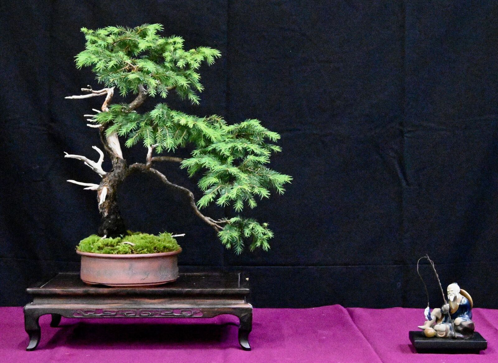 bonsai exhibit 2.jpeg