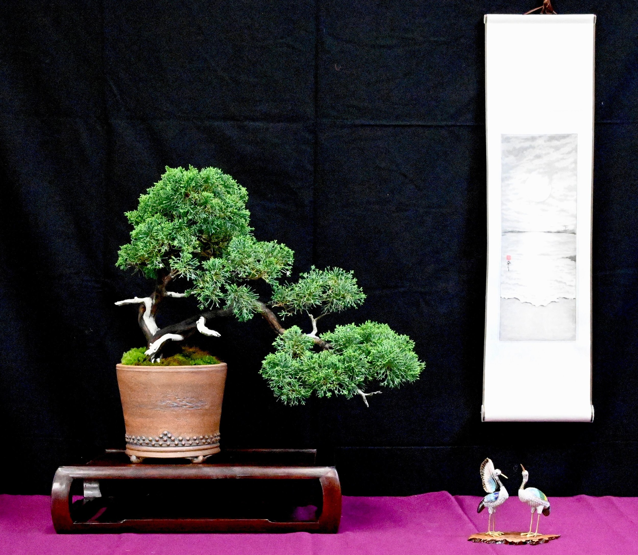 bonsai exhibit 4.jpeg