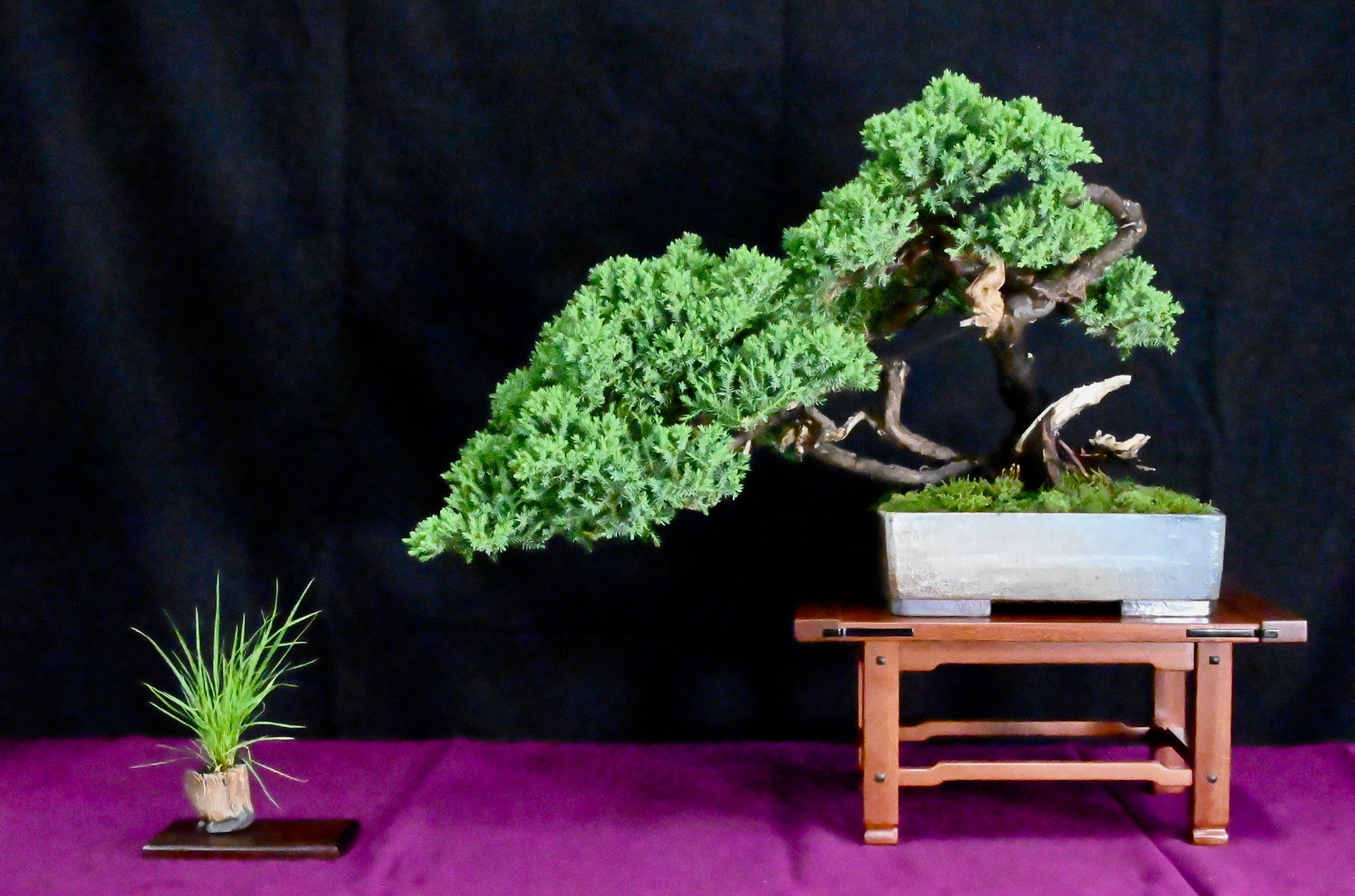 bonsai exhibit 13.jpeg