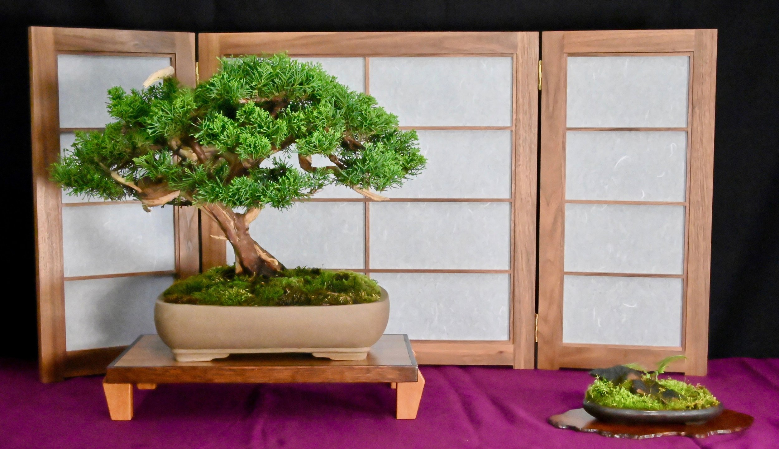 bonsai exhibit 15.jpeg