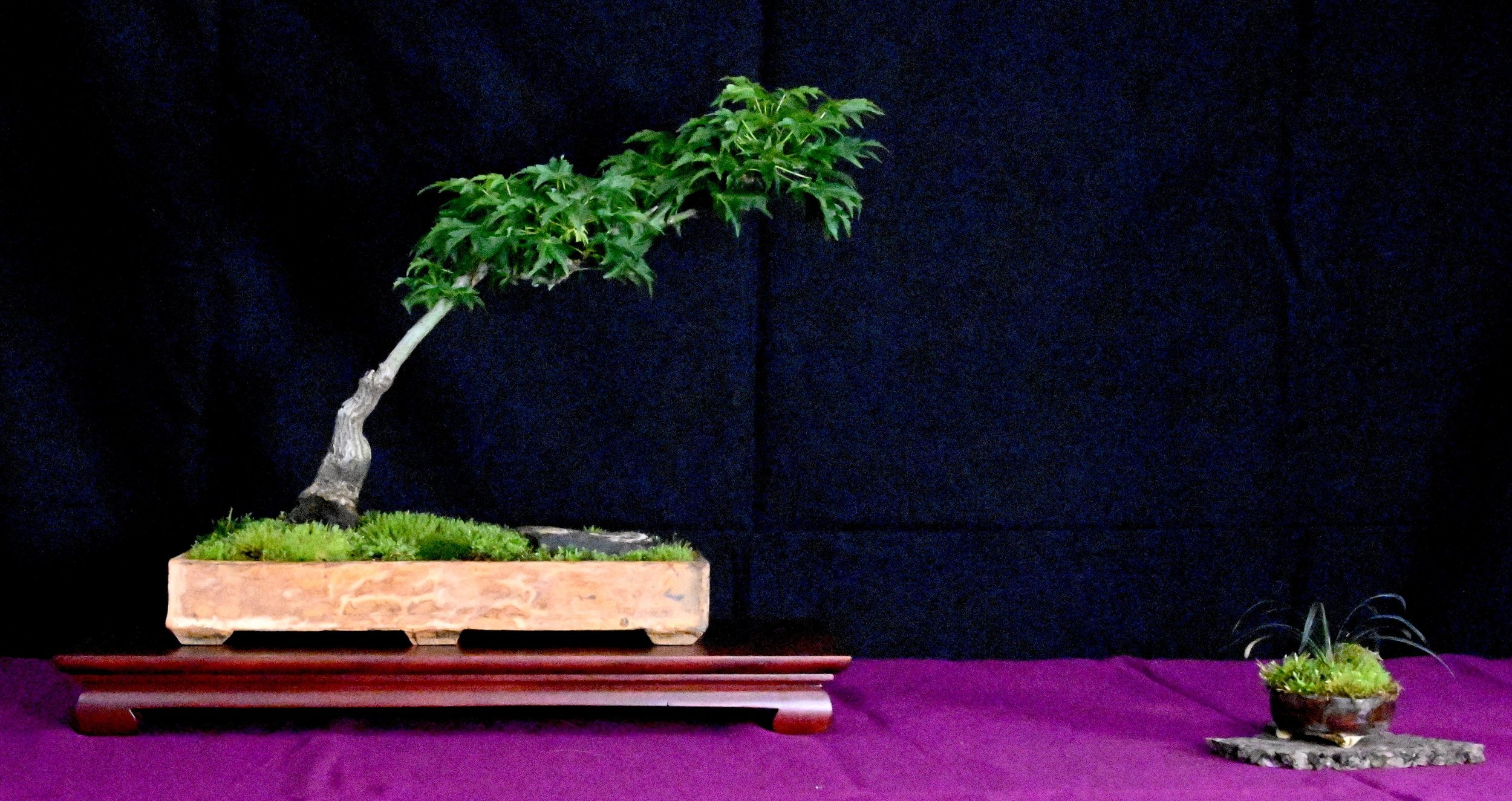 bonsai exhibit 16.jpeg
