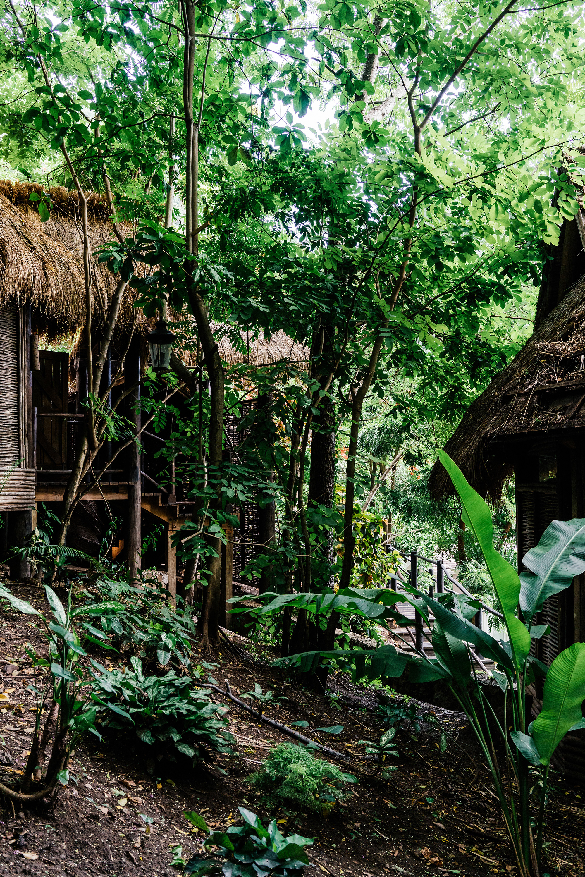 Natura Bisse 'The Cure' Facials  at  Rainforest Spa