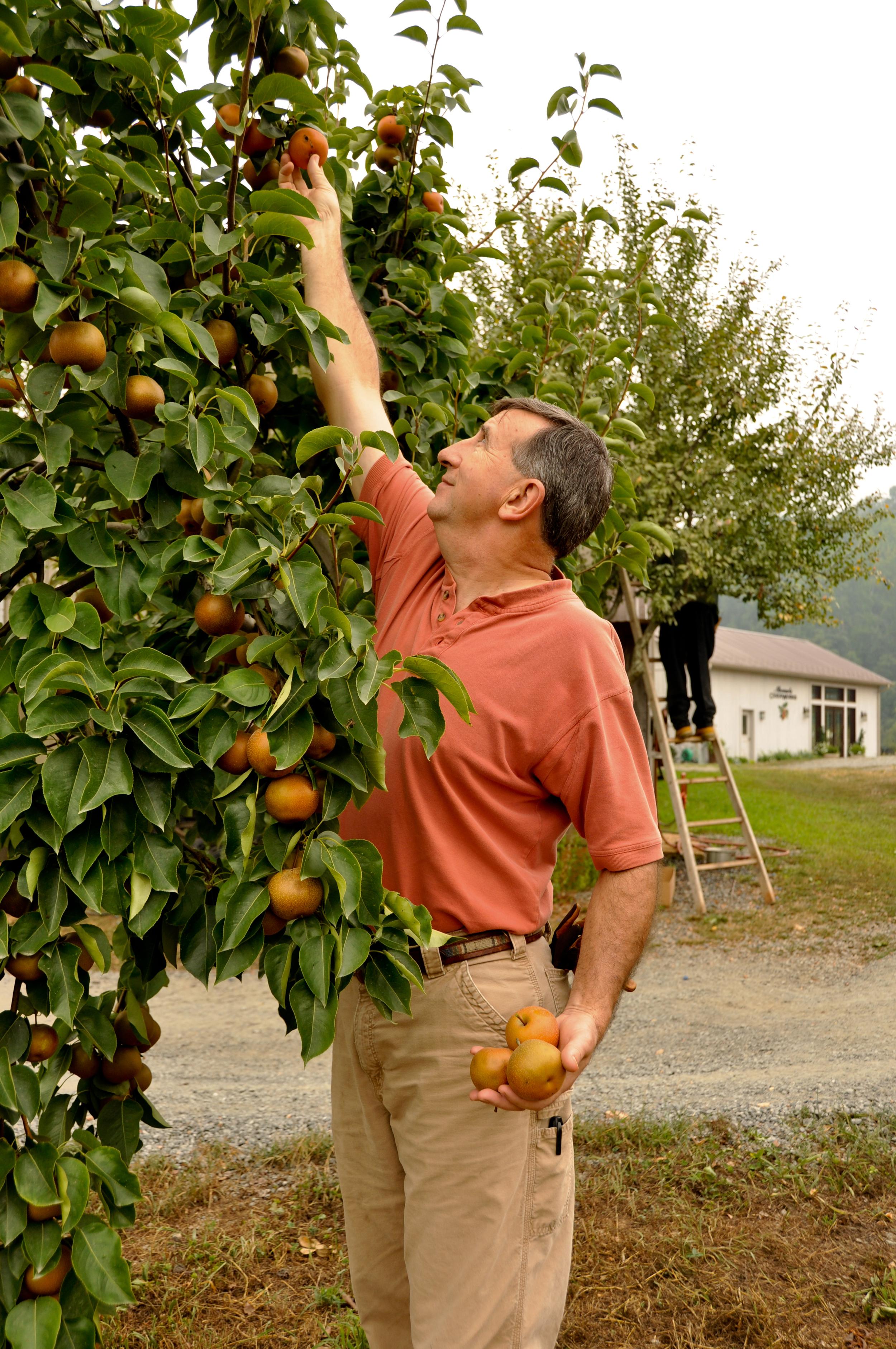 Apples 001.jpg